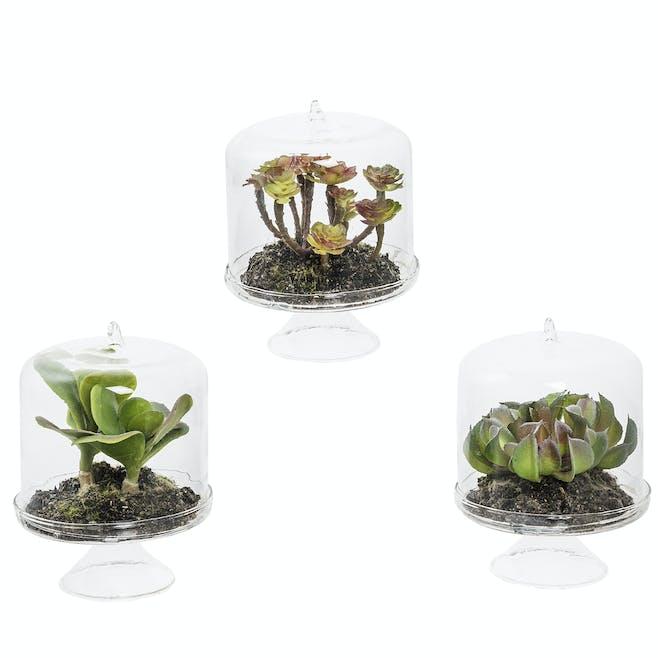Succulentes en dôme