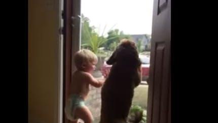 Vidéo : l'adorable réaction d'un chien et d'un bébé au   retour du papa à la maison