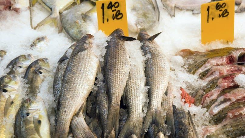 Certaines espèces de poissons prédateurs