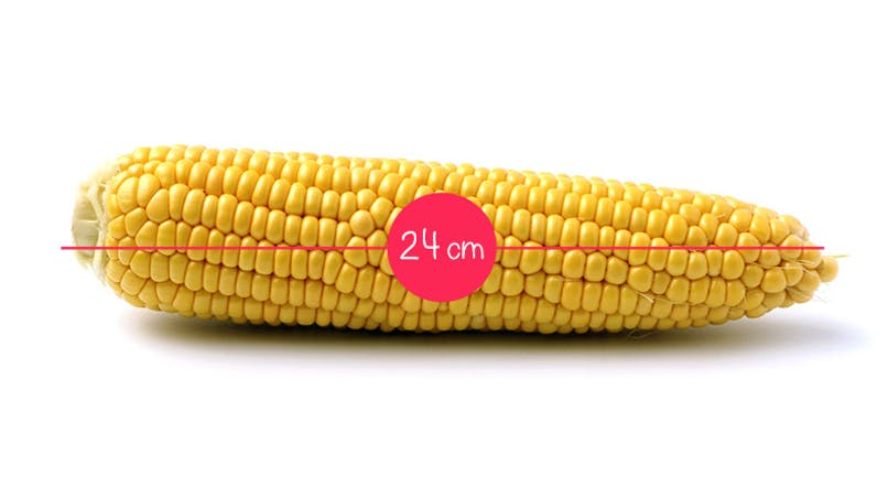 Semaine 25 : un épi de maïs