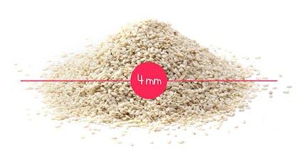 Semaine 4 : une graine de sésame