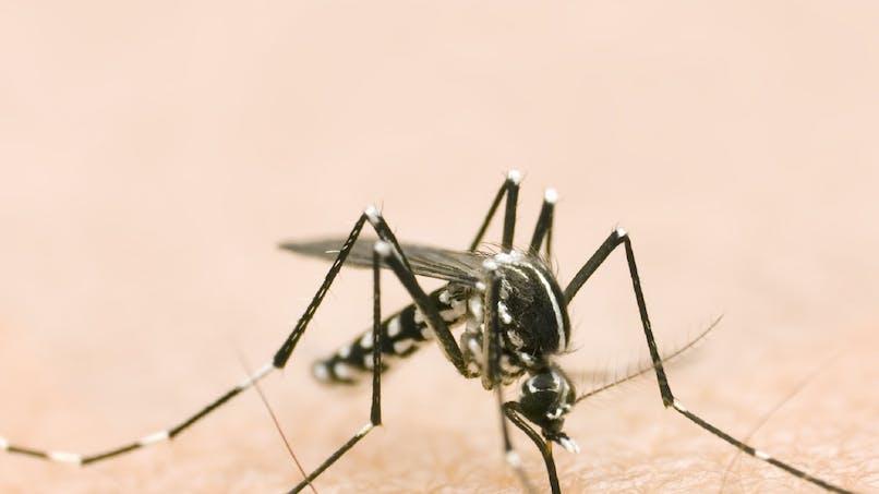Virus Zika : l'infection menacerait la vue des enfants   atteints