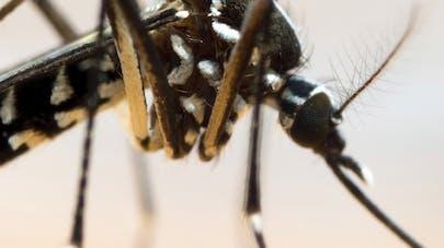 Virus Zika : le mystère des jumeaux inégalement infectés   au Brésil