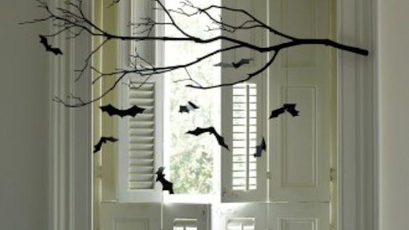 Chauves-souris en intérieur