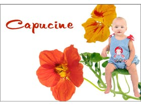 Capucine
