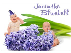 Jacinthe et Bluebell