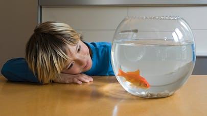 enfant zen qui regarde son poisson rouge