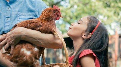 une petite fille regarde une poule et un panier d'œufs