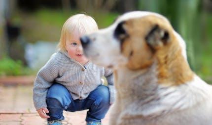 Accidents avec les chiens : les gestes préventifs pour les  enfants