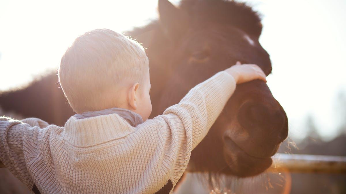 bébé caresse poney