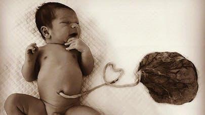 bébé lotus bien ou pas ?