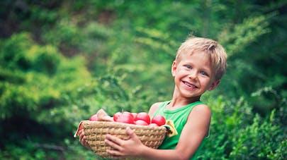 petit garçon tenant un plateau de tomates