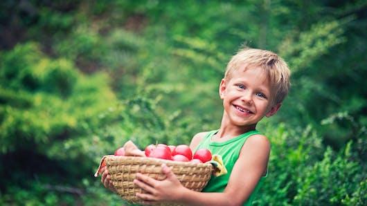 La tomate, une mine de bienfaits