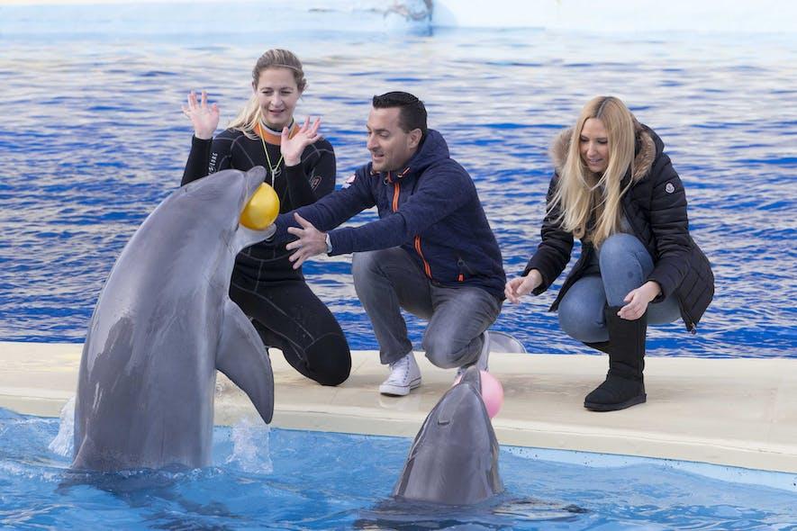 Approchez les dauphins !