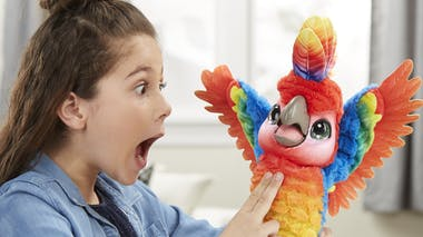 Show-Coco, perroquet interactif