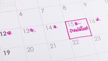Ovulation : calcul, durée, calendrier... Le point