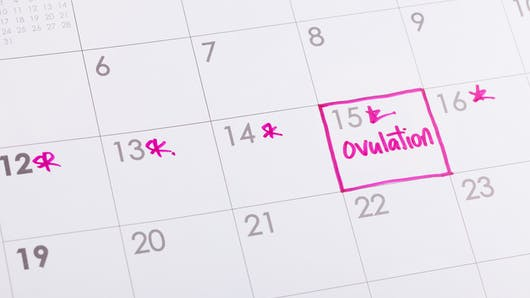 Ovulation : calcul, durée, calendrier... Le point.