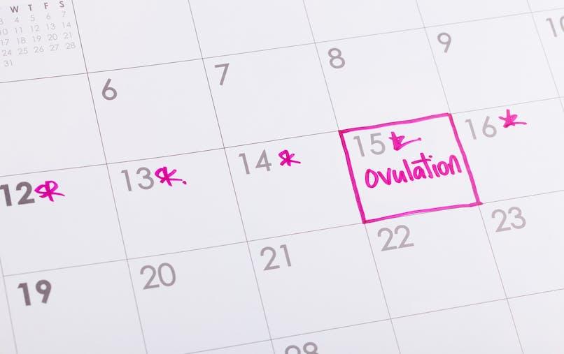 Calendrier d'ovulation et période d'ovulation
