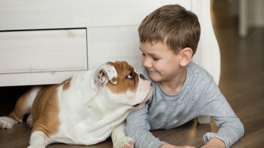 Des chiens formés pour aider des enfants diabétiques, une première en France