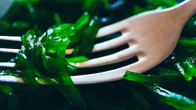 algue alimentaires