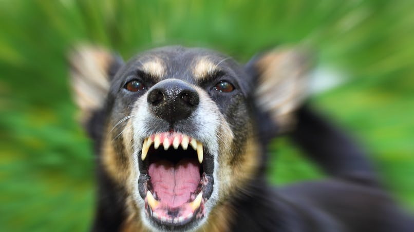 Un enfant défiguré par le chien de sa nounou : la maman appelle à l'aide