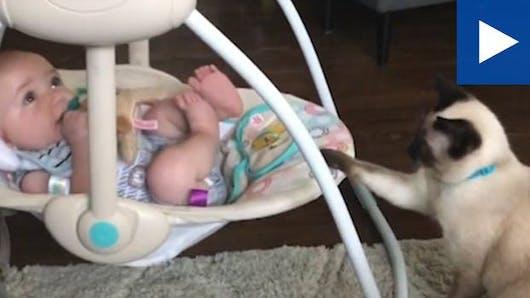 L'adorable vidéo d'un bébé bercé par... un chat !