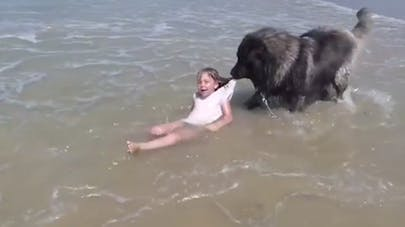 un chien sauve une fillette de la noyade