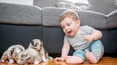 bébé avec des adorables chiots