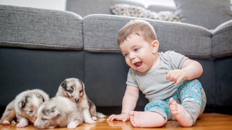 bébé joue avec des chiots