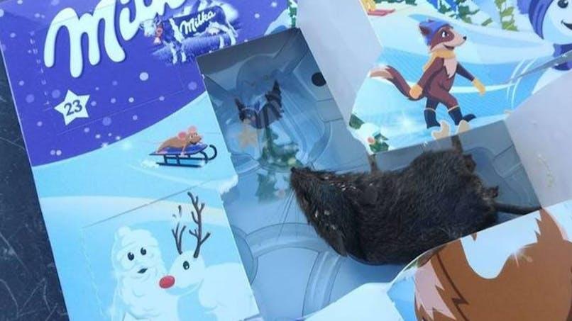 Elle découvre une souris dans le calendrier de l'Avent de sa fille