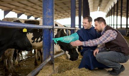 Infertilité : elle tombe enceinte grâce à une émission télévisée...sur les vaches !