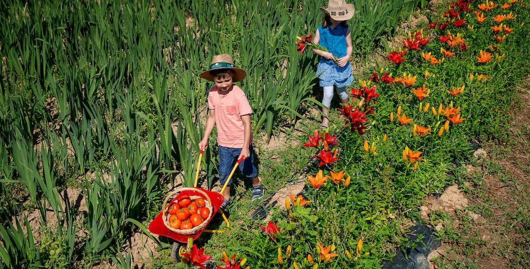 Cueillez des fleurs en famille