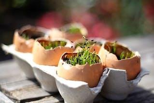 Bricolage de Pâques avec des œufs