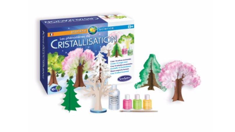 Les phénomènes de cristallisation : créer des arbres magiques