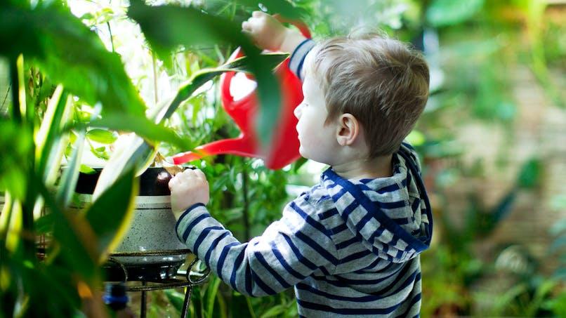 Fake news : non, une plante d'intérieur ne tue pas un enfant en une minute