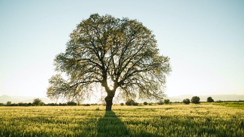 Belgique : un arbre planté pour chaque nouveau bébé