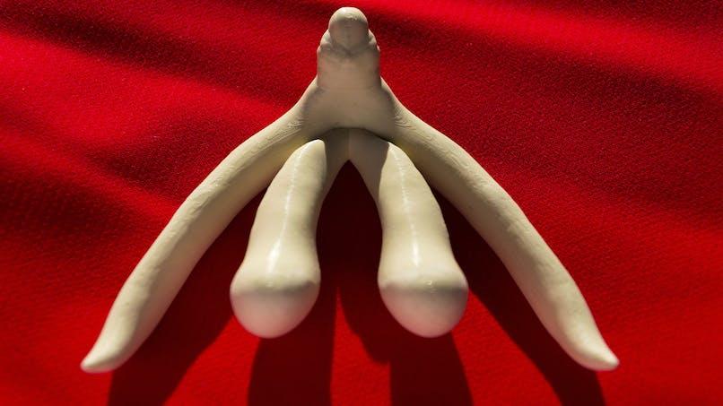 Des stars réclament la représentation du clitoris dans les manuels scolaires