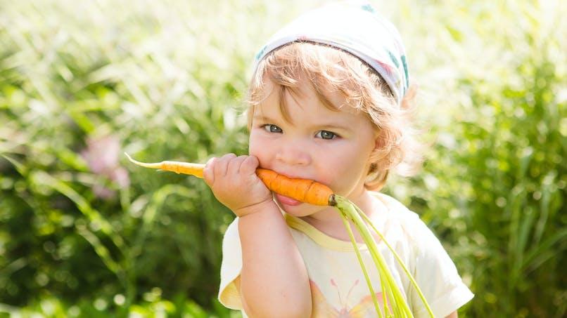 La carotte, un aliment santé pour toute la famille !