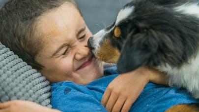 Haute-Saône : un bébé de 3 ans sauvé de la noyade par son chien
