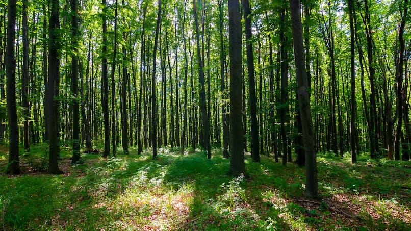 P'tit Fleck Espace ludique Grès et Forêt