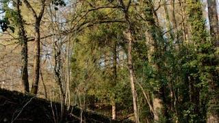 Le Bois Parcours Aventure