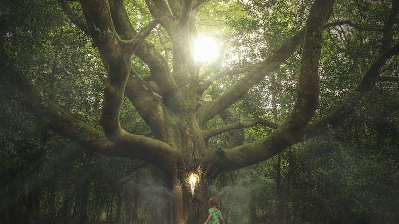 Une fillette retrouvée saine et sauve en forêt dans la Drôme