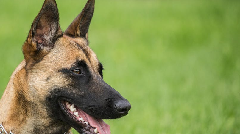 Alpes-Maritimes : un enfant de 3 ans mordu 56 fois par un chien