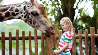 Notre sélection de zoos en France