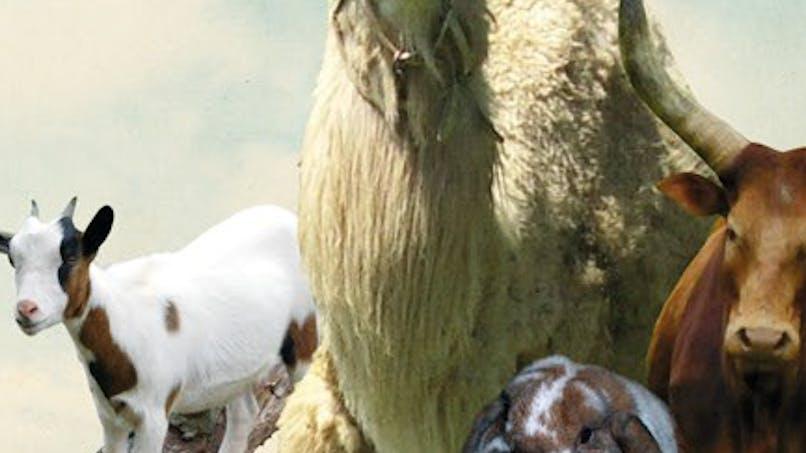 Animaland - Parc Animalier de St Michel
