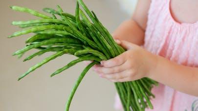 Haricots verts : de nombreux atouts nutritionnels