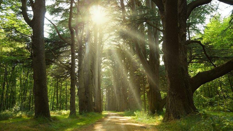 Jour du dépassement : l'humanité vit à crédit sur les ressources de la Terre