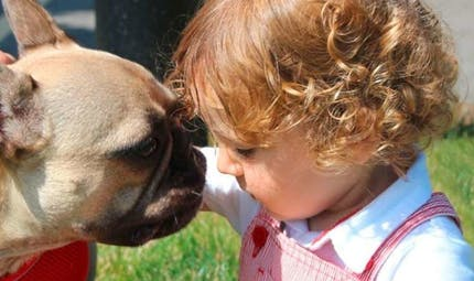 Des parents vétérinaires sauvent le chien du médecin qui a soigné leur bébé