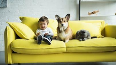 Quels sont les prénoms de chiens et de chats les plus donnés en 2019 ?
