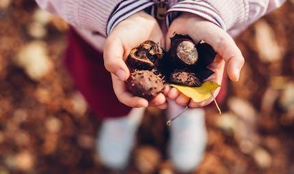 Marrons et châtaignes : ne pas les confondre pour éviter les intoxications